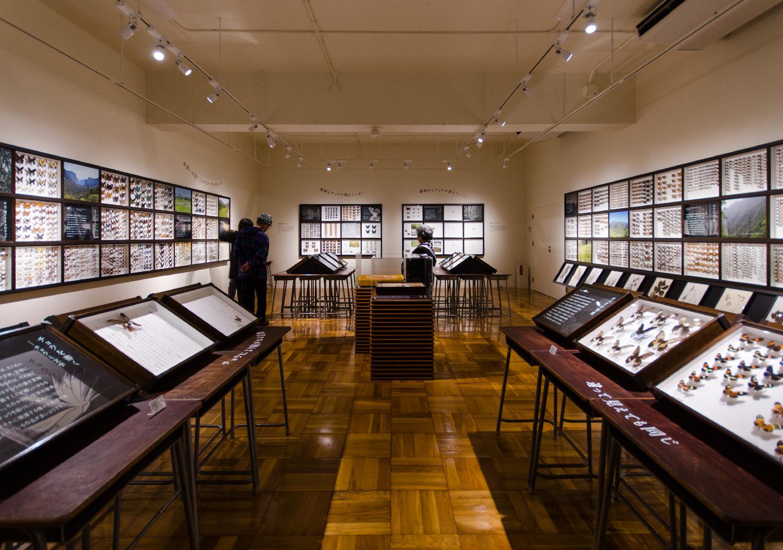 静岡のチョウ 世界のチョウ|ふじのくに地球環境史ミュージアム_2