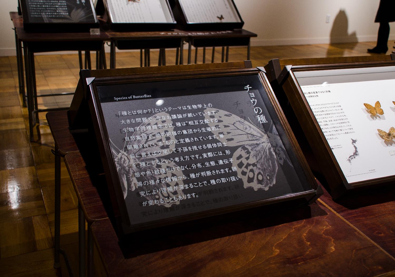静岡のチョウ 世界のチョウ|ふじのくに地球環境史ミュージアム_6