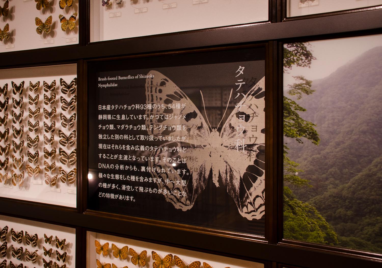 静岡のチョウ 世界のチョウ|ふじのくに地球環境史ミュージアム_9