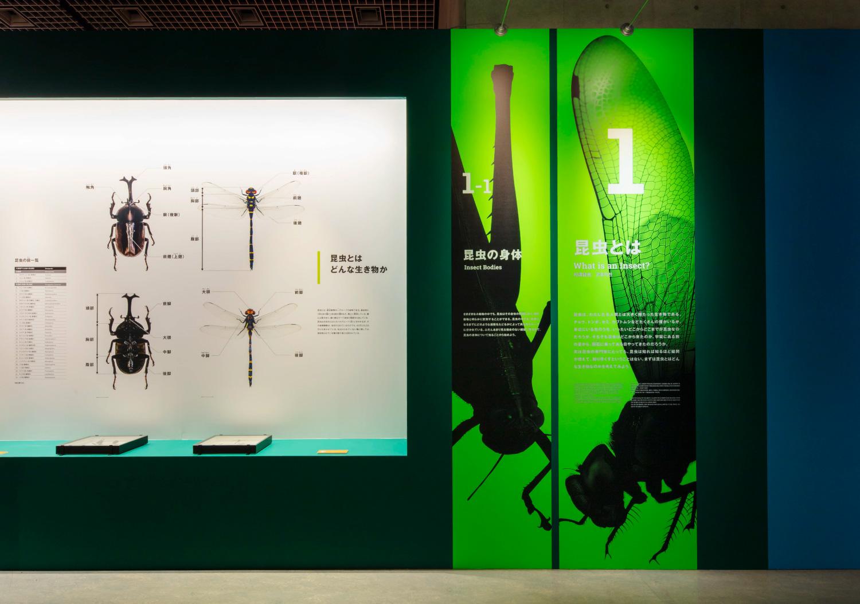 国立科学博物館 特別展「昆虫」_4