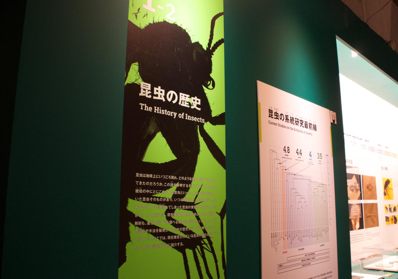 国立科学博物館 特別展「昆虫」_5