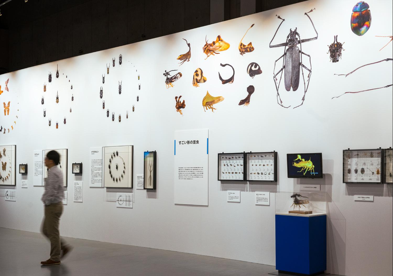 国立科学博物館 特別展「昆虫」_14