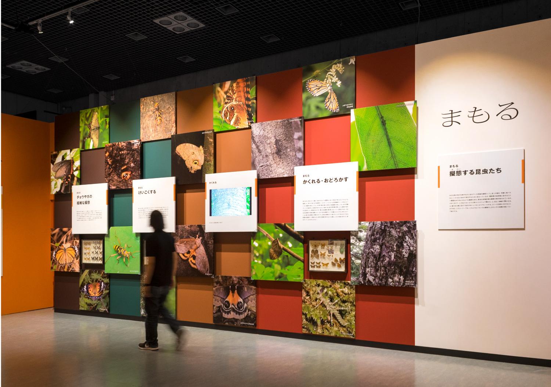 国立科学博物館 特別展「昆虫」_19