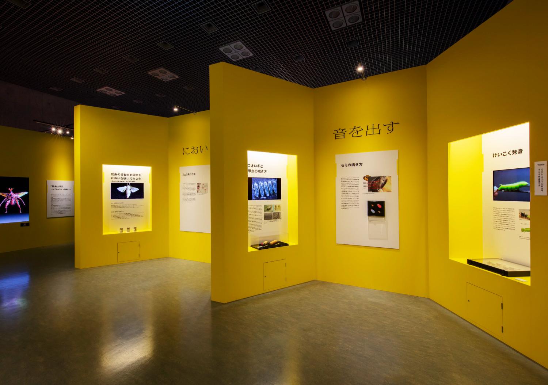 国立科学博物館 特別展「昆虫」_21