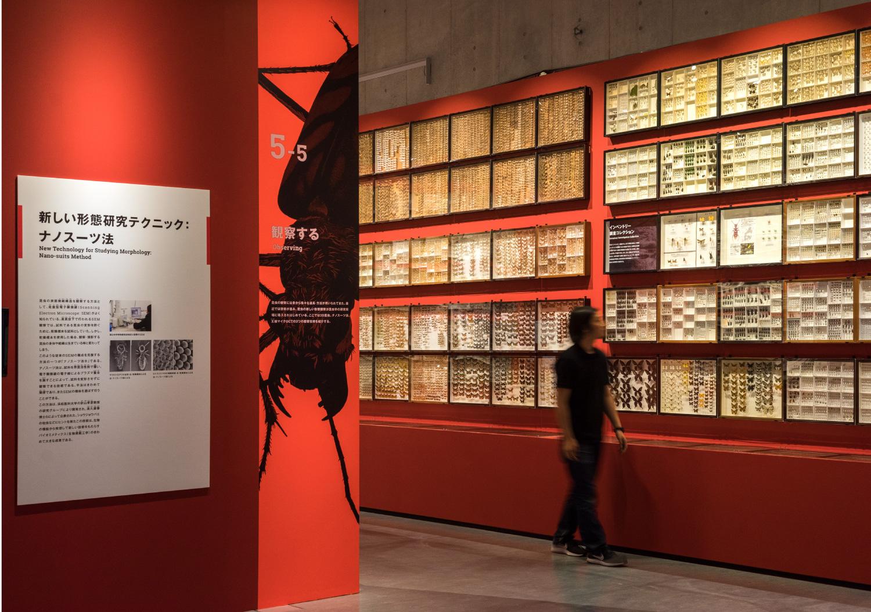 国立科学博物館 特別展「昆虫」_24