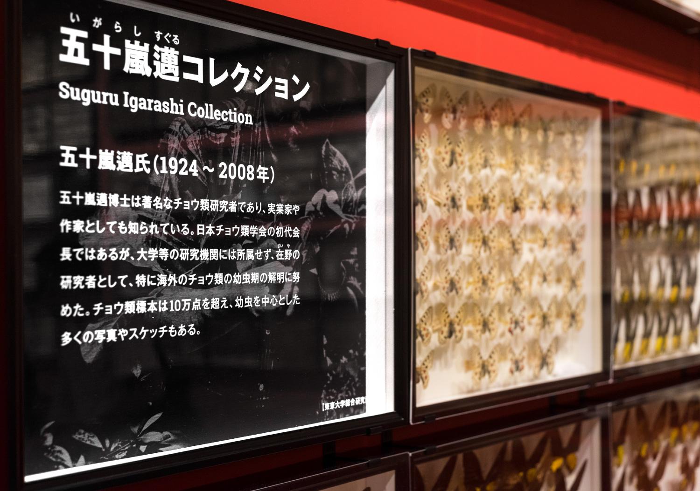 国立科学博物館 特別展「昆虫」_25