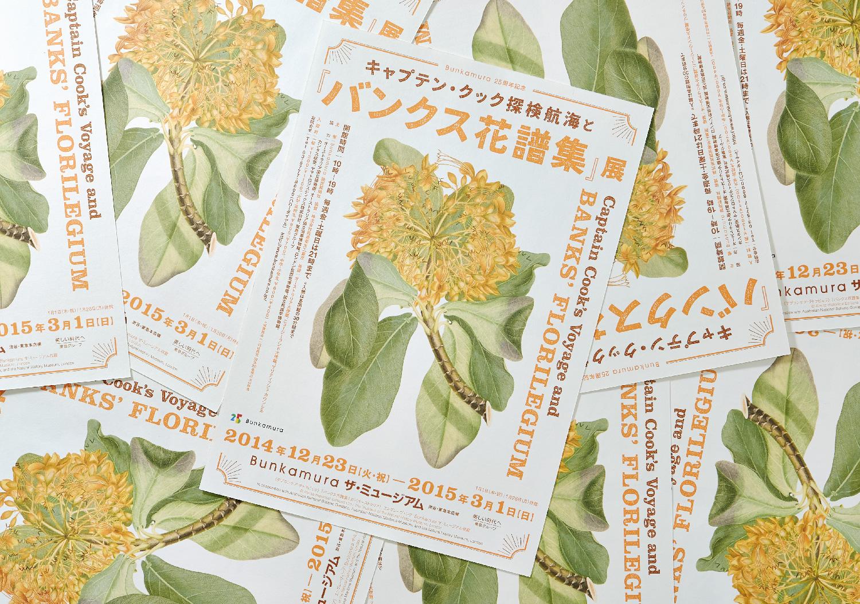 『バンクス花譜集』展|Bunkamura ザ・ミュージアム_2