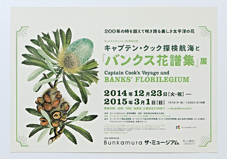 『バンクス花譜集』展|Bunkamura ザ・ミュージアム_5